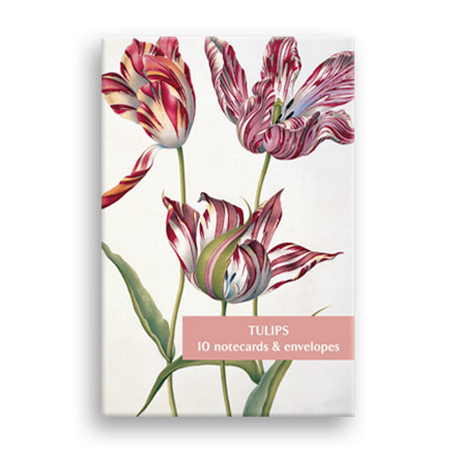 *  Briefkarten Fitzwilliam Museum - Tulpen