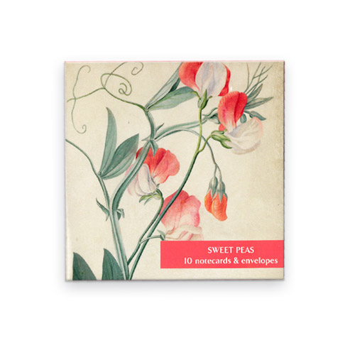 *  Briefkarten Fitzwilliam Museum - SWEET PEAS | WICKEN